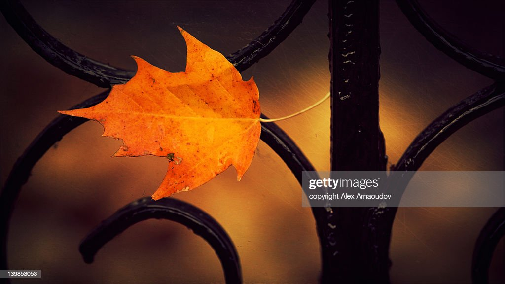 Autumn in fence : Stock Photo
