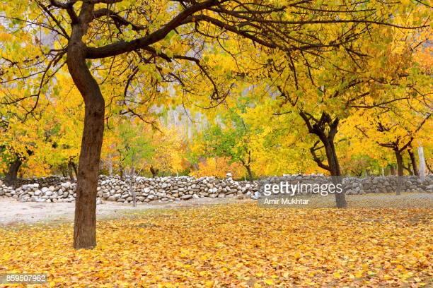 Autumn In Gilgit Baltistan, Pakistan