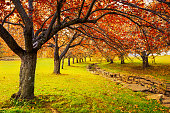 Autumn in Hurd Park, Dover, New Jersey with fall foliage on cherry trees.