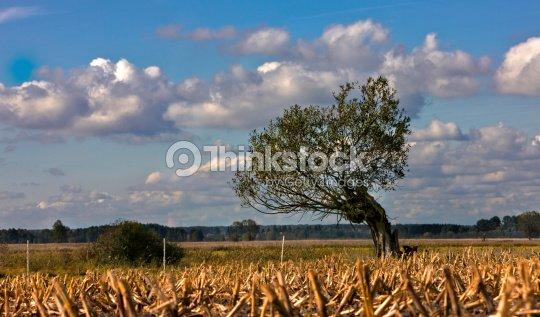 Autumn in Podlasie : Stock Photo