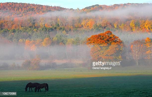 Herbst in Berhires
