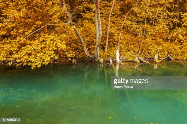 Autumn in the Japanese park. Reflection of trees in the lake