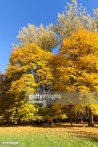Autumn in the park, colorful trees : Foto de stock