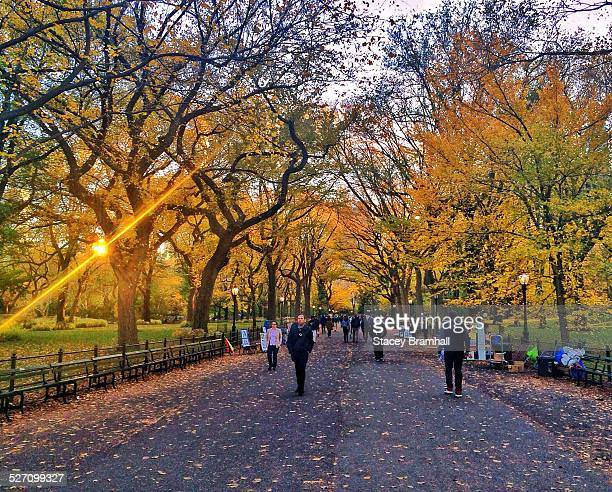 Autumn in the Promenade of New York City's Central Park