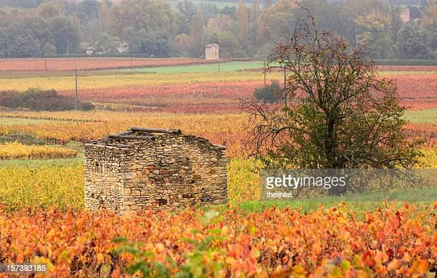 Automne de la Provence