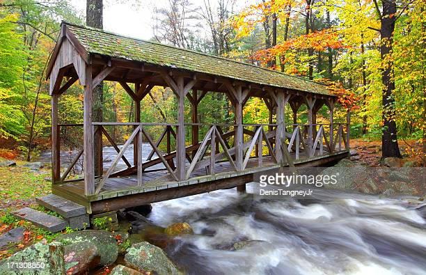 Autumn in the Willard Brook State Forest Massachusetts