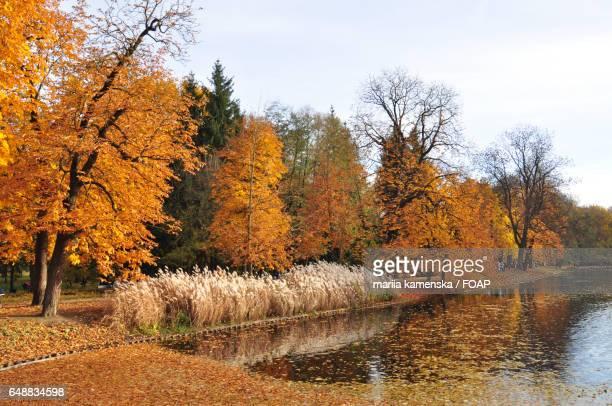 Autumn in Warsaw park