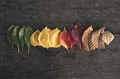 Leaves in different stages on a wooden table