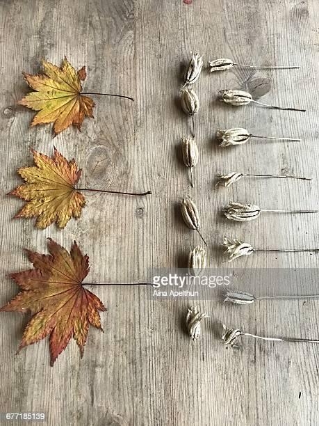 Autumn Knolling