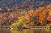 Beautiful autumn scene at Biwa lake on Mt.Shigakogen, Japan.