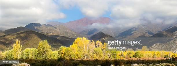 Autumn landscape in Mendoza, Argentina