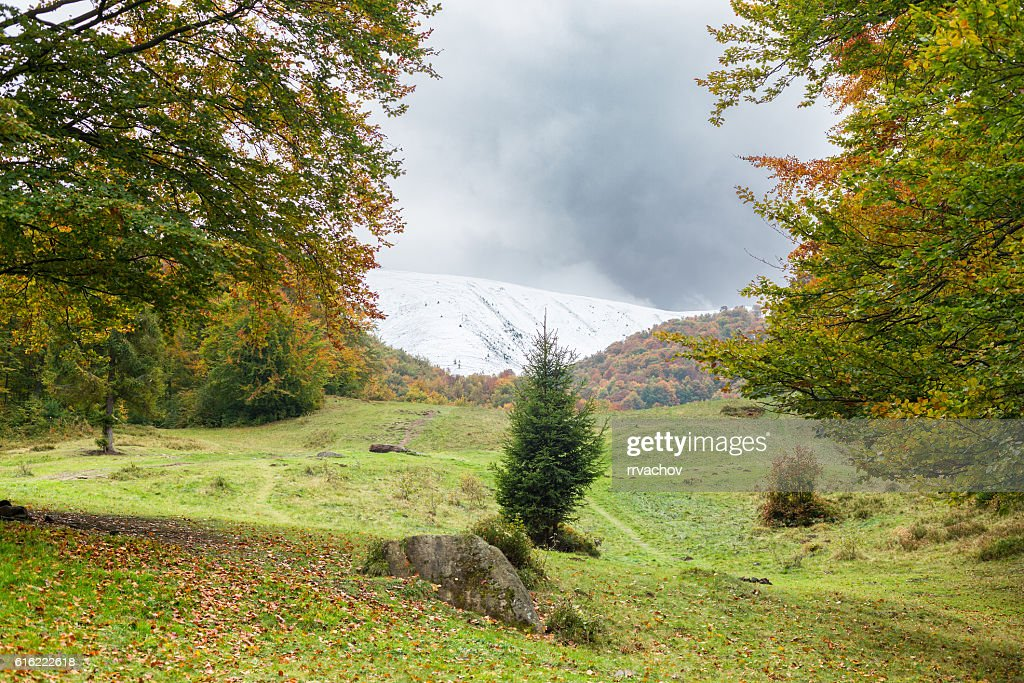 Autumn landscape. Large meadow with trees on both sides : Stock-Foto