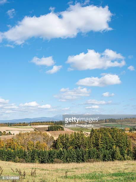 Autumn landscape of Hokkaido
