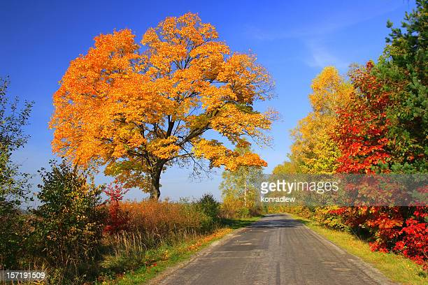 Autumn landscape - road