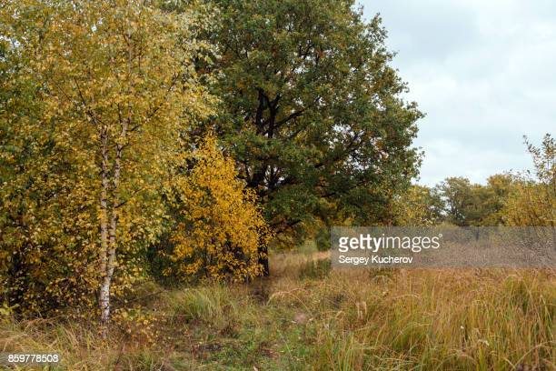 Autumn landscape with birch and oak trees