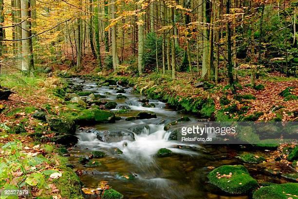 Herbstliche Landschaft mit brook im Wald