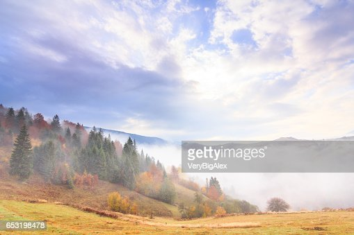 Autumn landscape with fog in the mountains. Fir forest on the hills. Carpathians, Ukraine, Europe : Stock-Foto