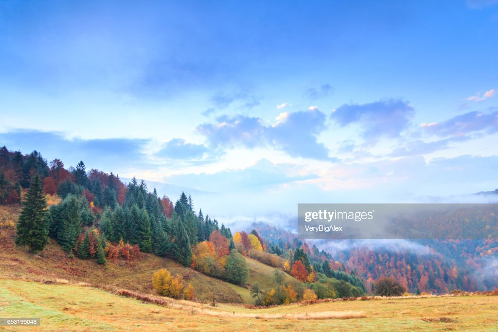 Autumn landscape with fog in the mountains. Fir forest on the hills. Carpathians, Ukraine, Europe : Stock Photo