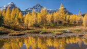 Larch Valley in Autumn.  A one hour hike up from Lake Moraine in the Banff National Park.