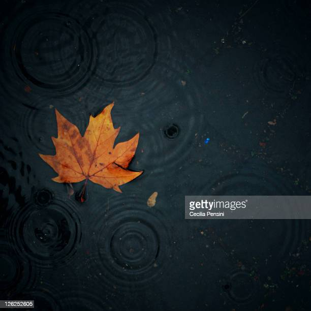 Autumn leaf in water