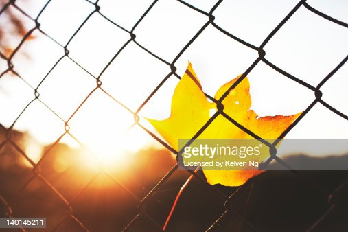 Unusual Leaves On Wire Fence Images - Electrical Circuit Diagram ...