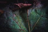 Macro photo of autumn leafs.