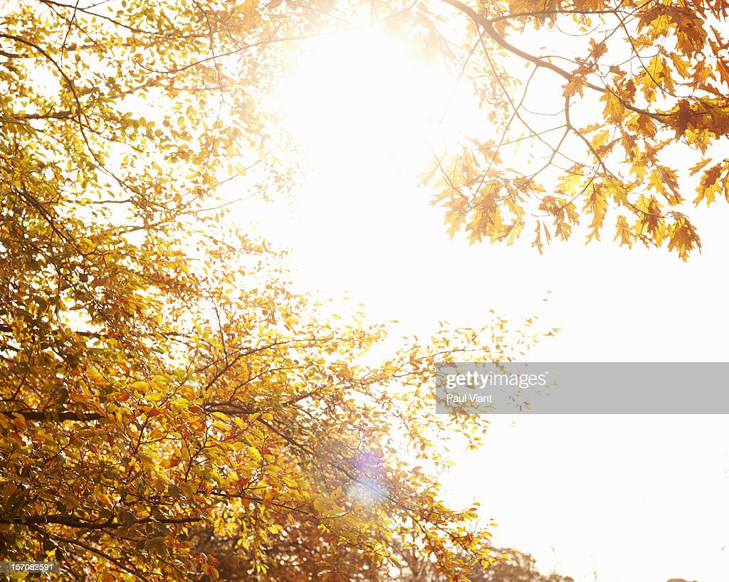 autumn leafs in full colour : Stock Photo