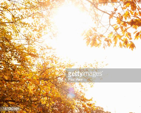 autumn leafs in full colour : Stock Photo
