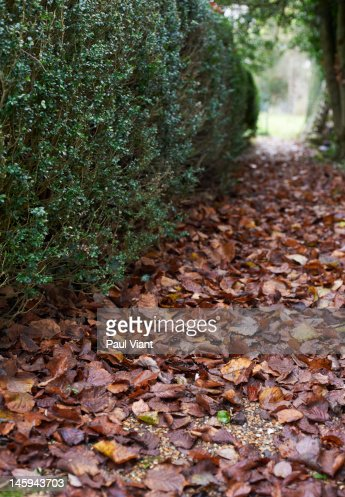 autumn leafs : Foto de stock