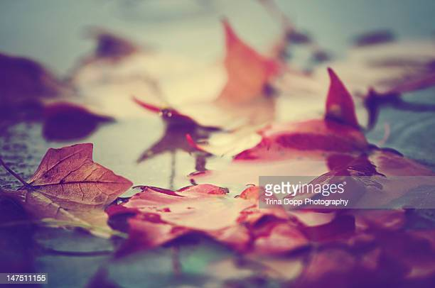 Autumn leaves adrift in mud puddle