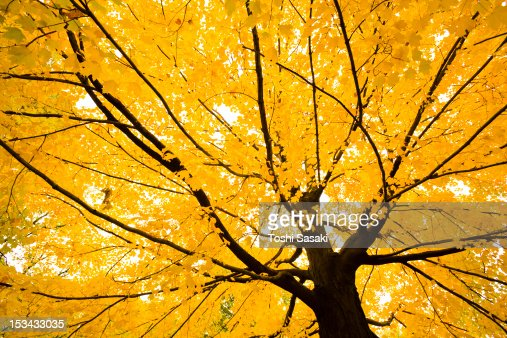 Autumn leaves at Central Park : Stock Photo