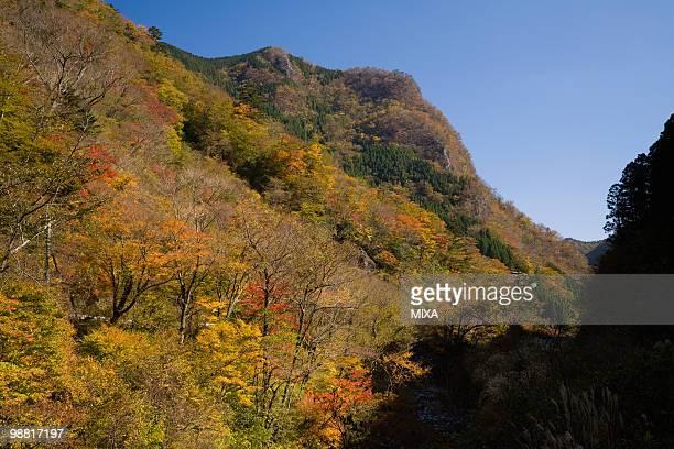 Autumn Leaves at Gokanosho, Yatsushiro, Kumamoto, Japan