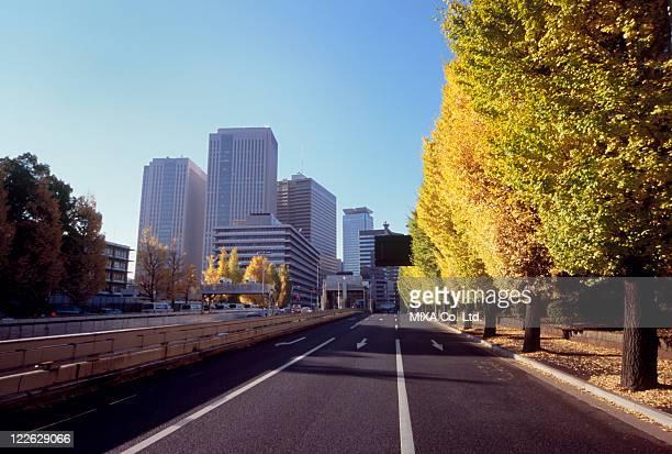 Autumn Leaves at Kasumigaseki, Chiyoda, Tokyo, Japan