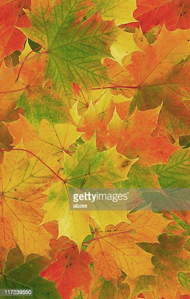 Autumn leaves collage background