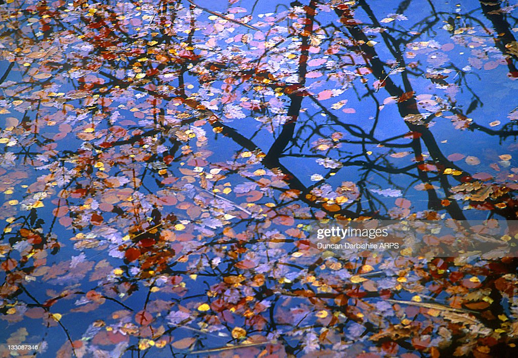 Autumn leaves in Coniston water : Stock Photo