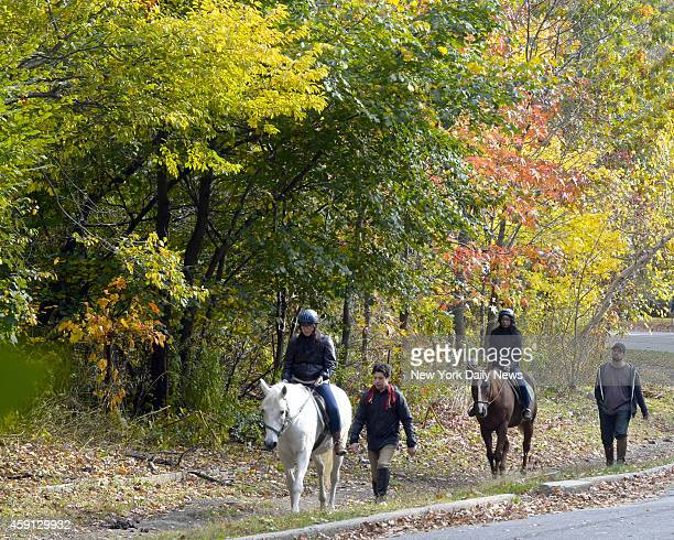Autumn leaves in Prospect Park were at their height this weekend for one more warm Sunday before winter cold kicks in Nov9 2014