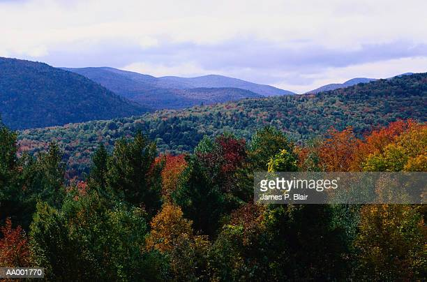 Autumn Leaves in the Green Mountains, Vermont
