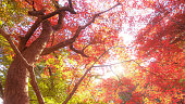 leaves turned crimson color