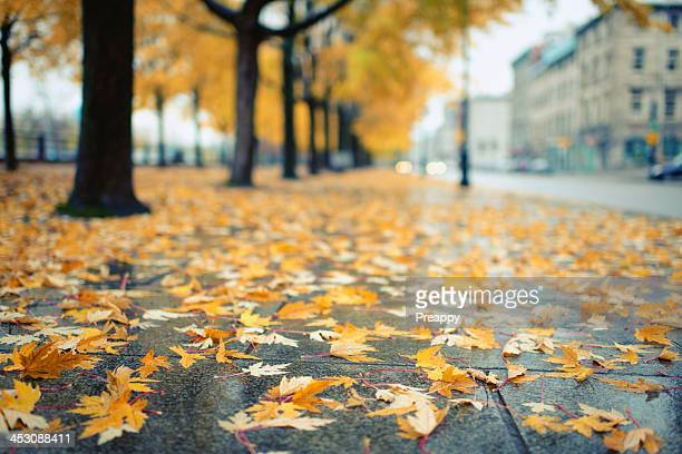 Autumn leaves lying on the street