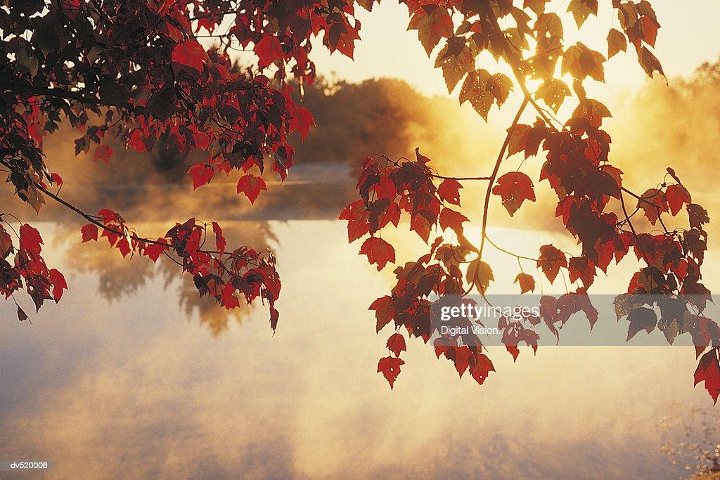 Autumn Leaves, New England, USA : Stock Photo
