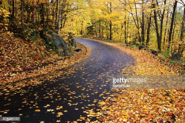 Autumn Leaves on a Curved Road