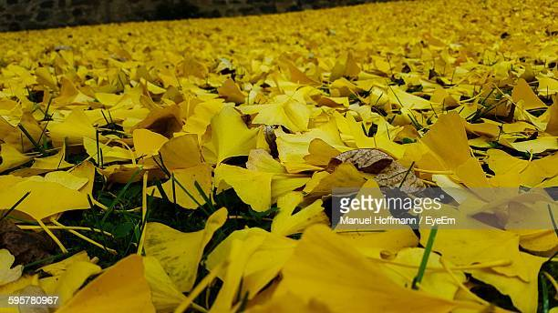 Autumn Leaves On Field
