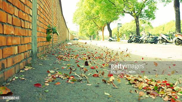 Autumn Leaves On Footpath By Brick Wall