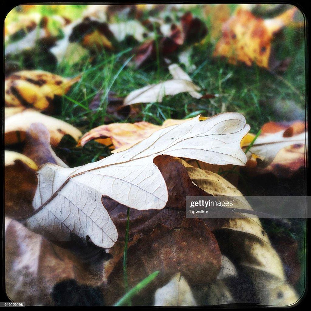 Autumn Leaves on Grass : Stock Photo