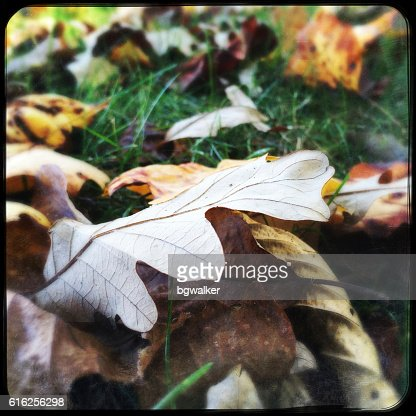 Autumn Leaves on Grass : Stock Photo