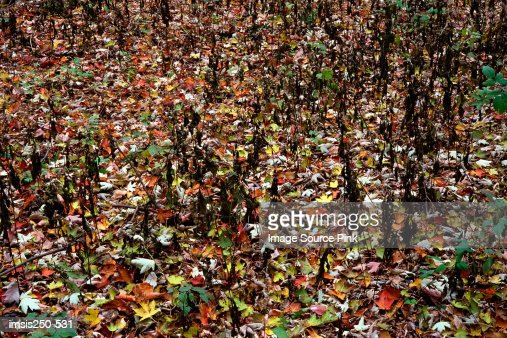 Autumn leaves on ground : Stock Photo