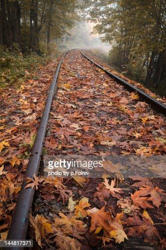 Autumn leaves on railroad tracks