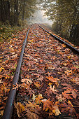 Autumn leaves on railroad tracks