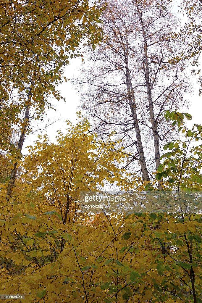 Autumn leaves on tree : Stock Photo