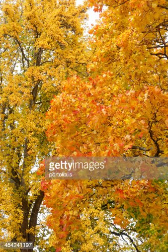 Autumn leaves on tree : Stock Photo